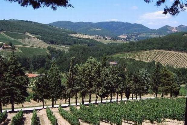 Podkarpackie winnice otwarte na turystów