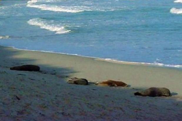 Odbudowa plaży nie zakończy się w terminie