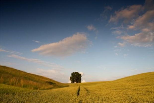 Lepsza organizacja obszarów wiejskich