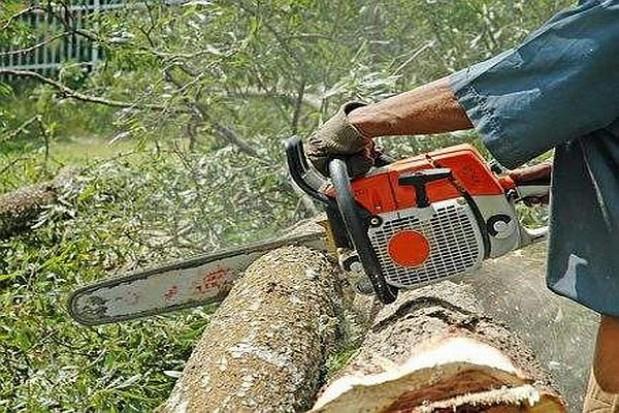 Za wycinkę drzew do prokuratury