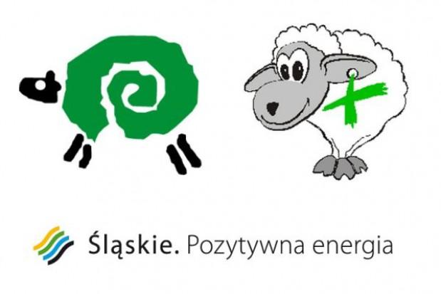 Barany na Śląsku mają się coraz lepiej