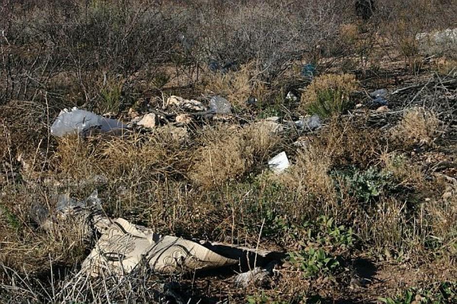 Śmieci rosną na drzewach