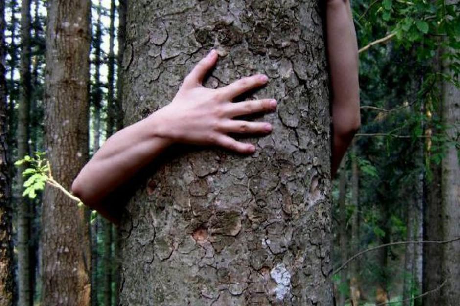 Posadzą drzewa na terenie 9 płockich szkół