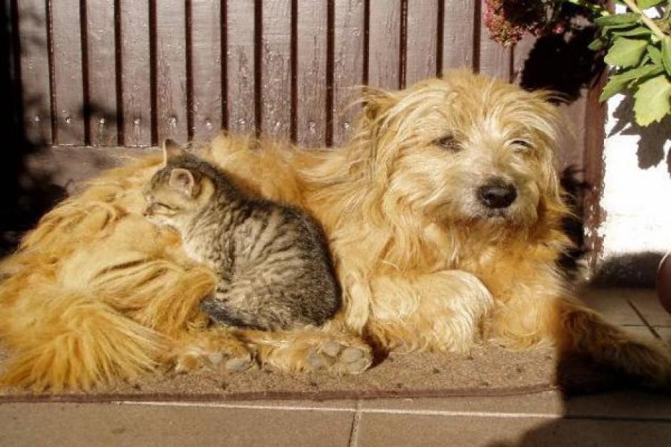 Kielce uchwaliły program zapobiegania bezdomności zwierząt