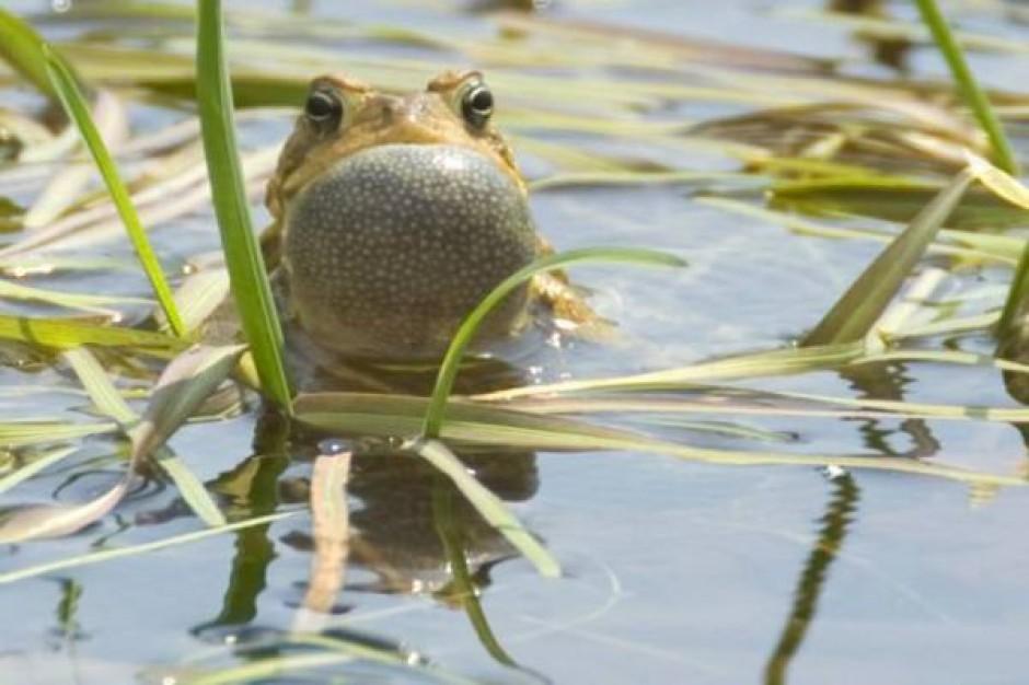 Co zabiło setki żab?