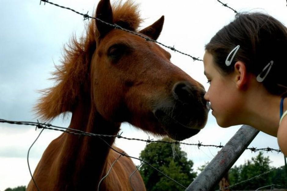 Szkoła w Sosnowcu otrzymała konia do hipoterapii