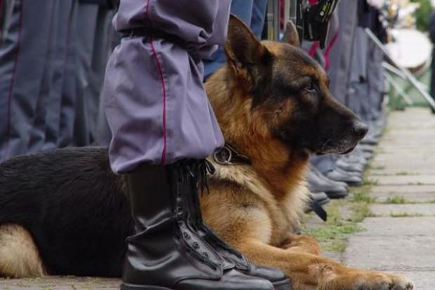 Policja nie ma na psy. Kupi je marszałek Sowa