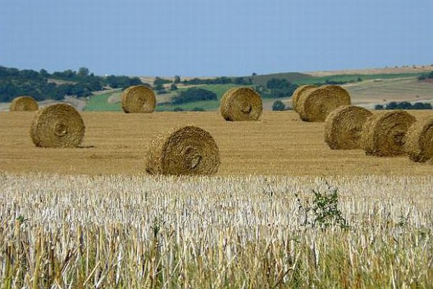 Rolnicy muszą zwrócić pieniądze Unii