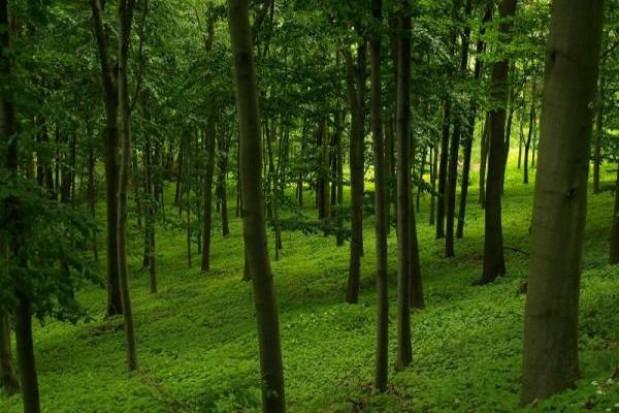 Uczniowie sadzą las