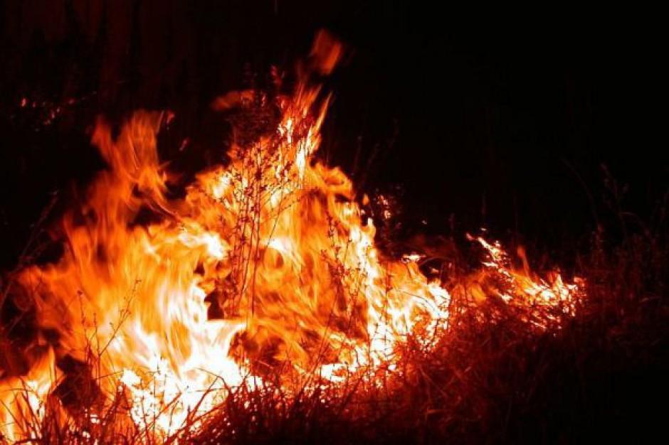 Kłótnia o zabezpieczenie lasów przed pożarami