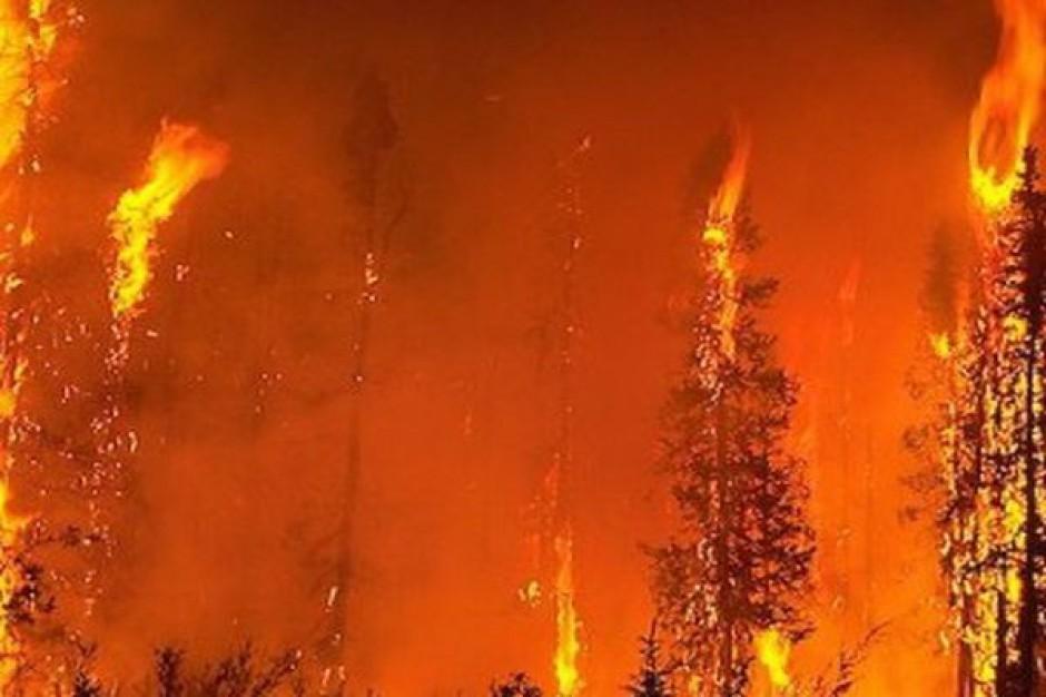 Groźne pożary na Śląsku