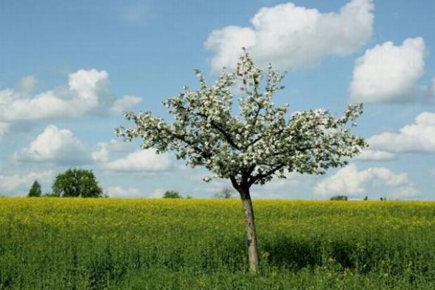 Dolnośląskie pachnące jabłkami