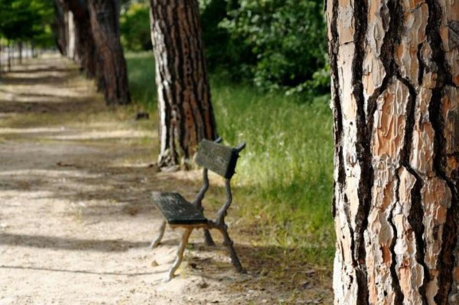 NIK o utrzymaniu zieleni w gminach