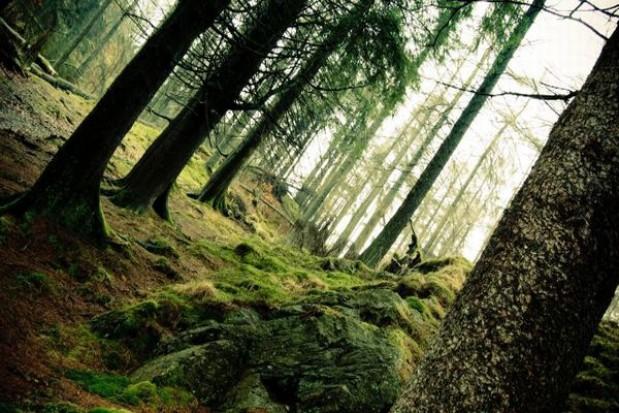 5 tys. ha nowych lasów w zachodniopomorskim