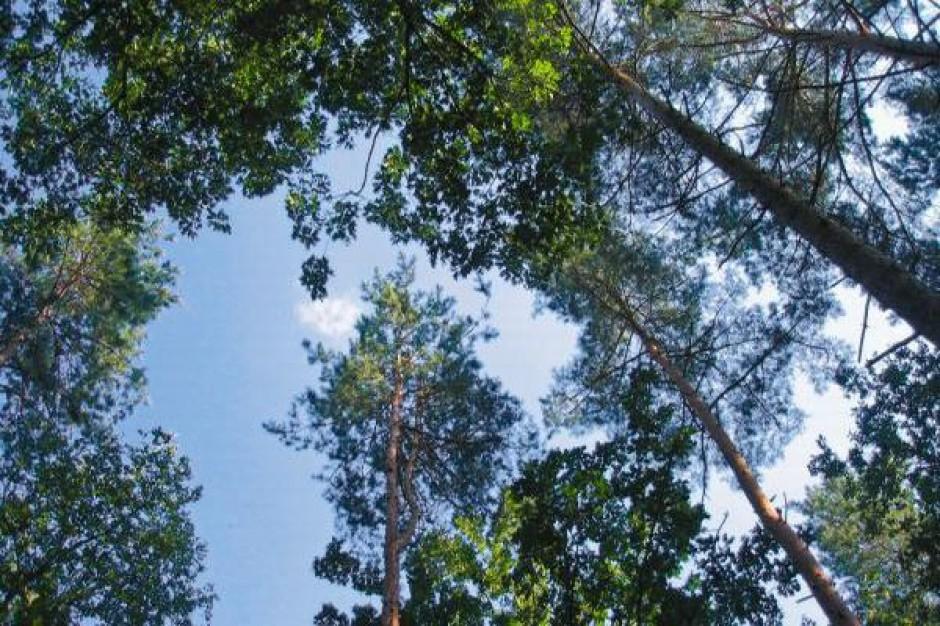 Drzewa w miastach - nie tylko zieleń ale i ekonomia