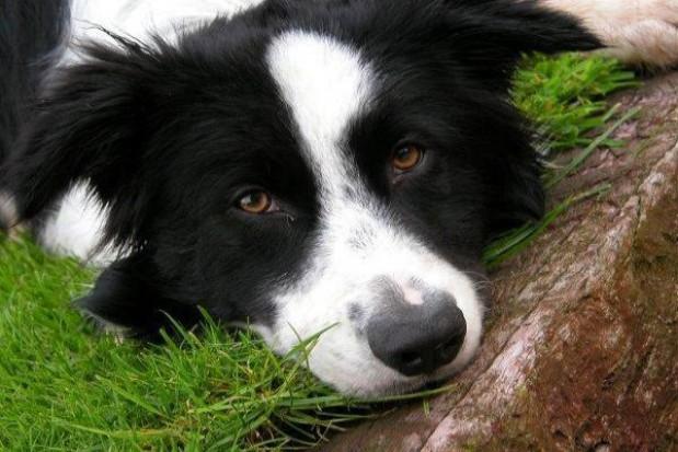 Gminy podrzucają sobie bezpańskie psy