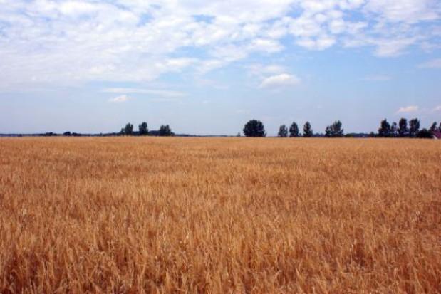 Ceny gruntów rolnych zwyżkują jak nigdy