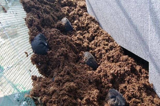 Ogrodnicza nowinka na opolskich skwerach