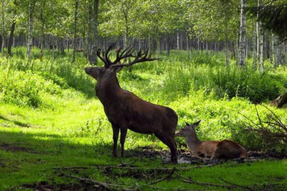 Zmiana sposobu wyznaczania granic parków narodowych poparta przez rząd