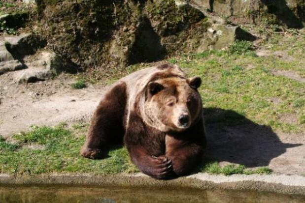 Przyczyną śmierci niedźwiadka znalezionego w Tatrach była choroba
