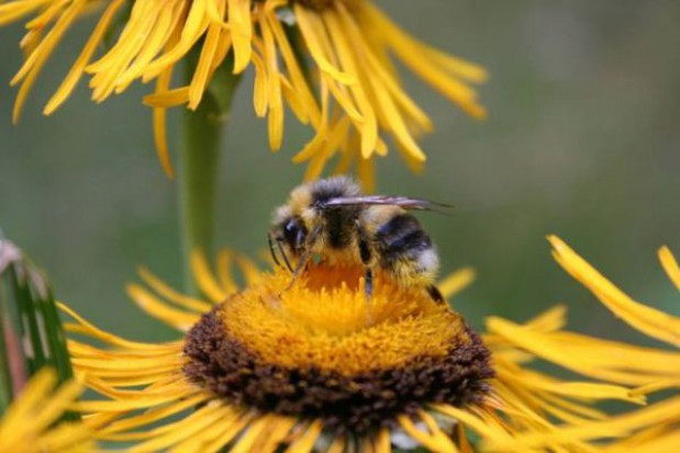 Rabata w kształcie pszczoły w Rzeszowie