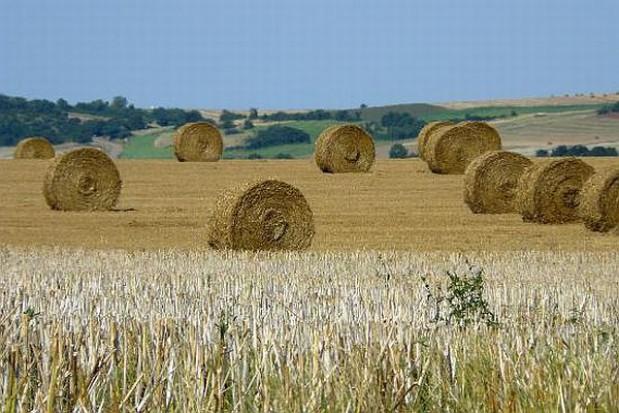 Nowe miejsca pracy na wsi
