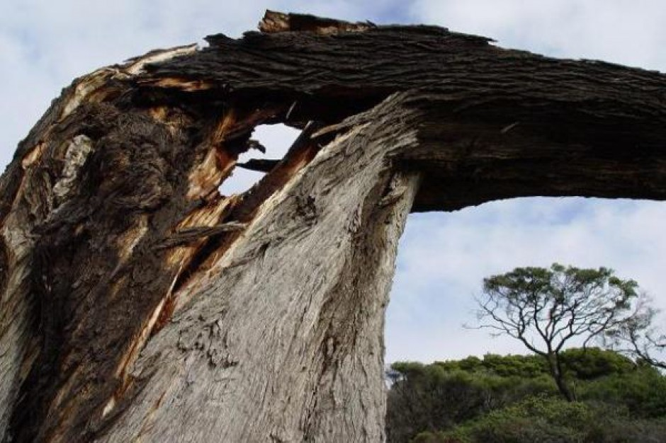 Uszkodzonego drzewa samowolnie nie wytniesz