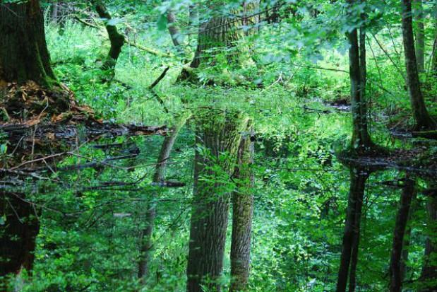 Nie powiększą Białowieskiego Parku Narodowego