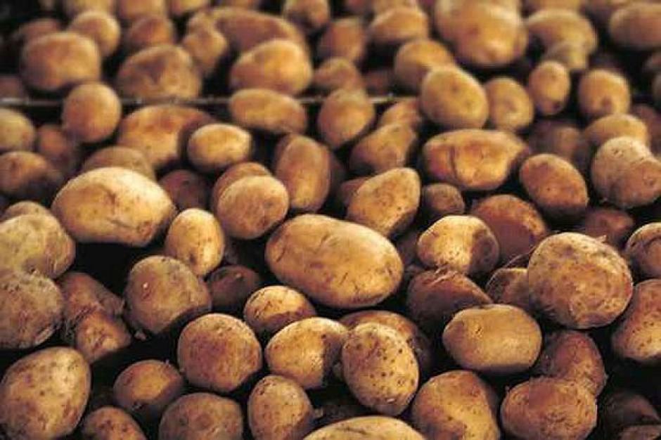 Katastrofalna sytuacja ziemniaka