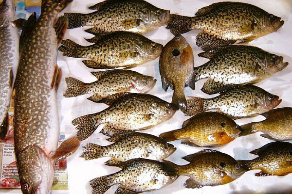 Ryby z przydomowych wędzarni robią furorę