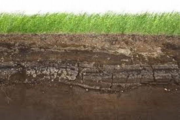 W Luboszycach będzie naturalna oczyszczalnia ścieków