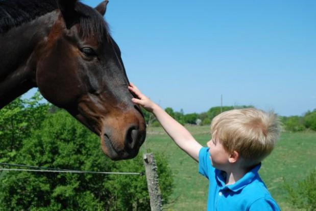 Szkoła dostała dwa konie do hipoterapii