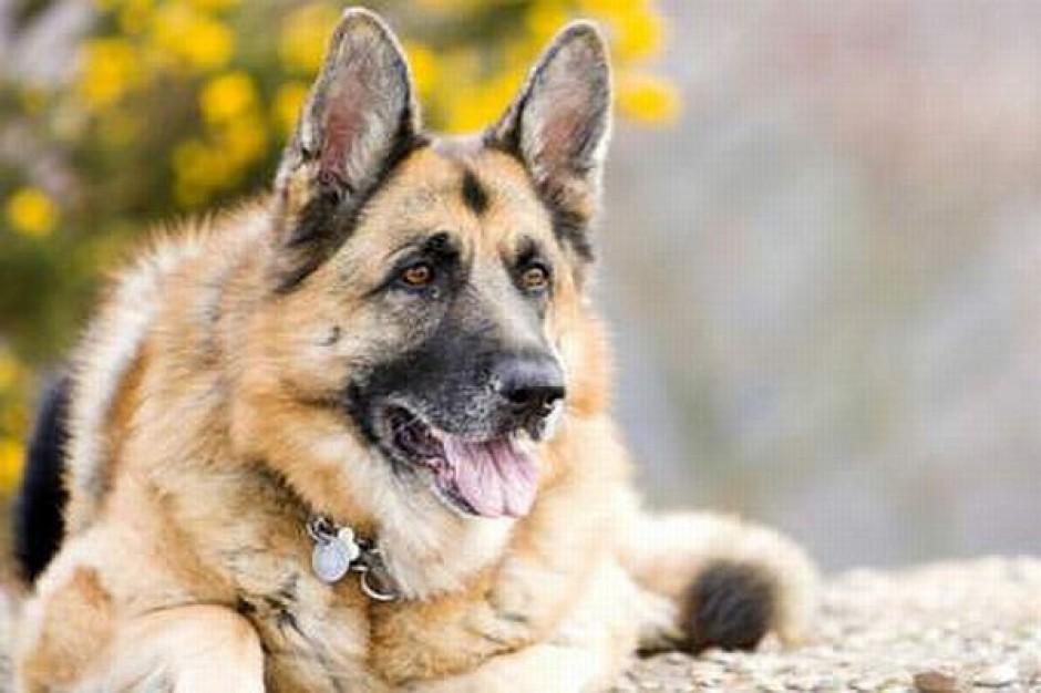 Pilotażowy nabór psów do służby
