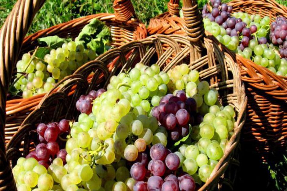 Na Podkarpaciu czas na winobranie