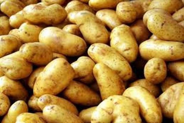 Pieką ziemniaki na dzień św. Tekli
