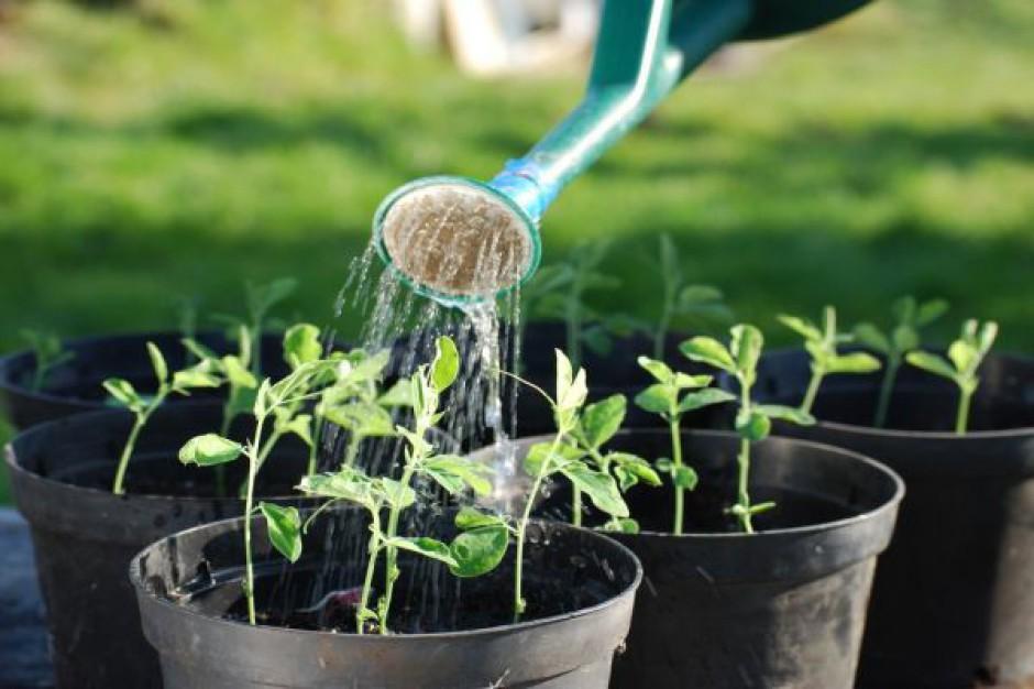 Ustawa o ogródkach działkowych wg SLD