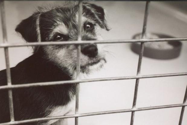 Robiąc zakupy pomóż bezdomnym zwierzakom