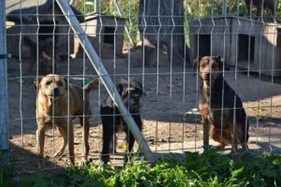 Dwa tysiące wyłapanych psów w prokuraturze