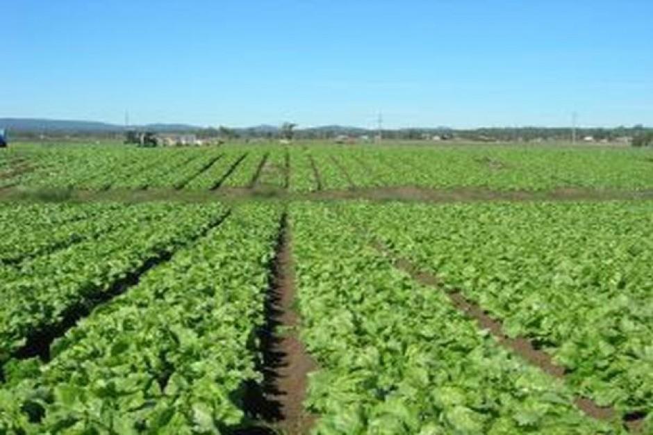 Opolskie stawia na sektor rolno-spożywczy