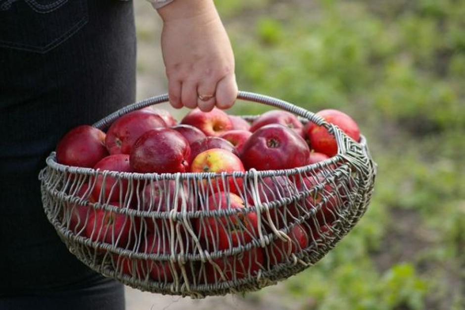 Samorządy kupią uczniom owoce?
