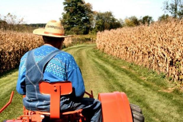 Rolnictwo ukrywa ok. 600 tys. bezrobotnych