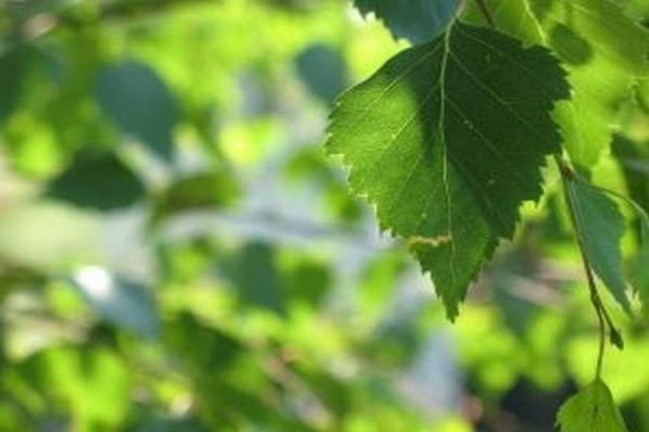 Rewitalizacja zieleni w Legnicy