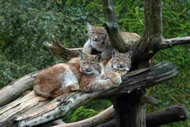Nowe atrakcje ogrodu zoobotanicznego w Toruniu