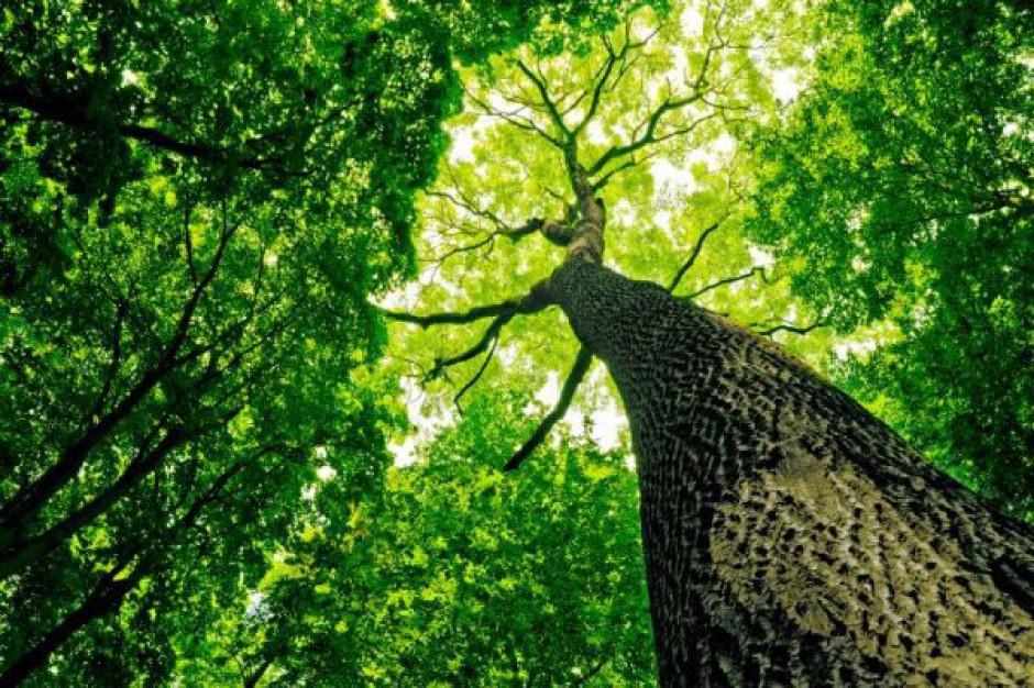 Toruński park odzyska blask