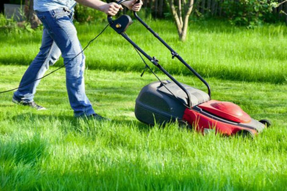 Grzywna za zaniedbany trawnik