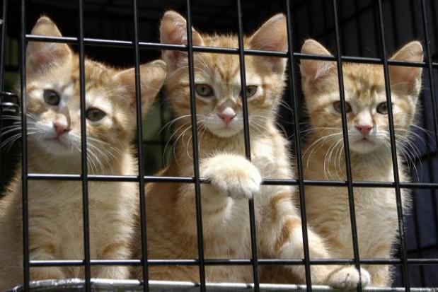 Odnowiono olsztyńskie schronisko dla zwierząt