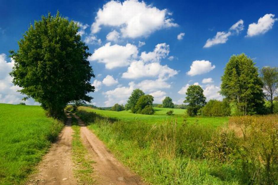46 mln na przebudowę dróg leśnych