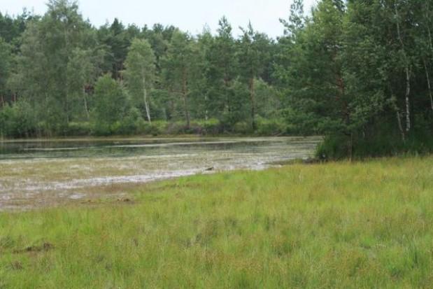 Powstały trzy nowe rezerwaty przyrody