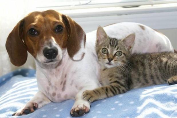 Nowe miejsce dla bezdomnych zwierzaków w regionie