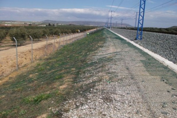 Jak zające zagroziły szybkiej kolei